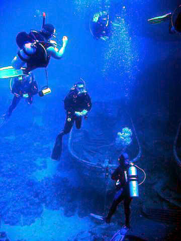 Sea Diving in Pelion